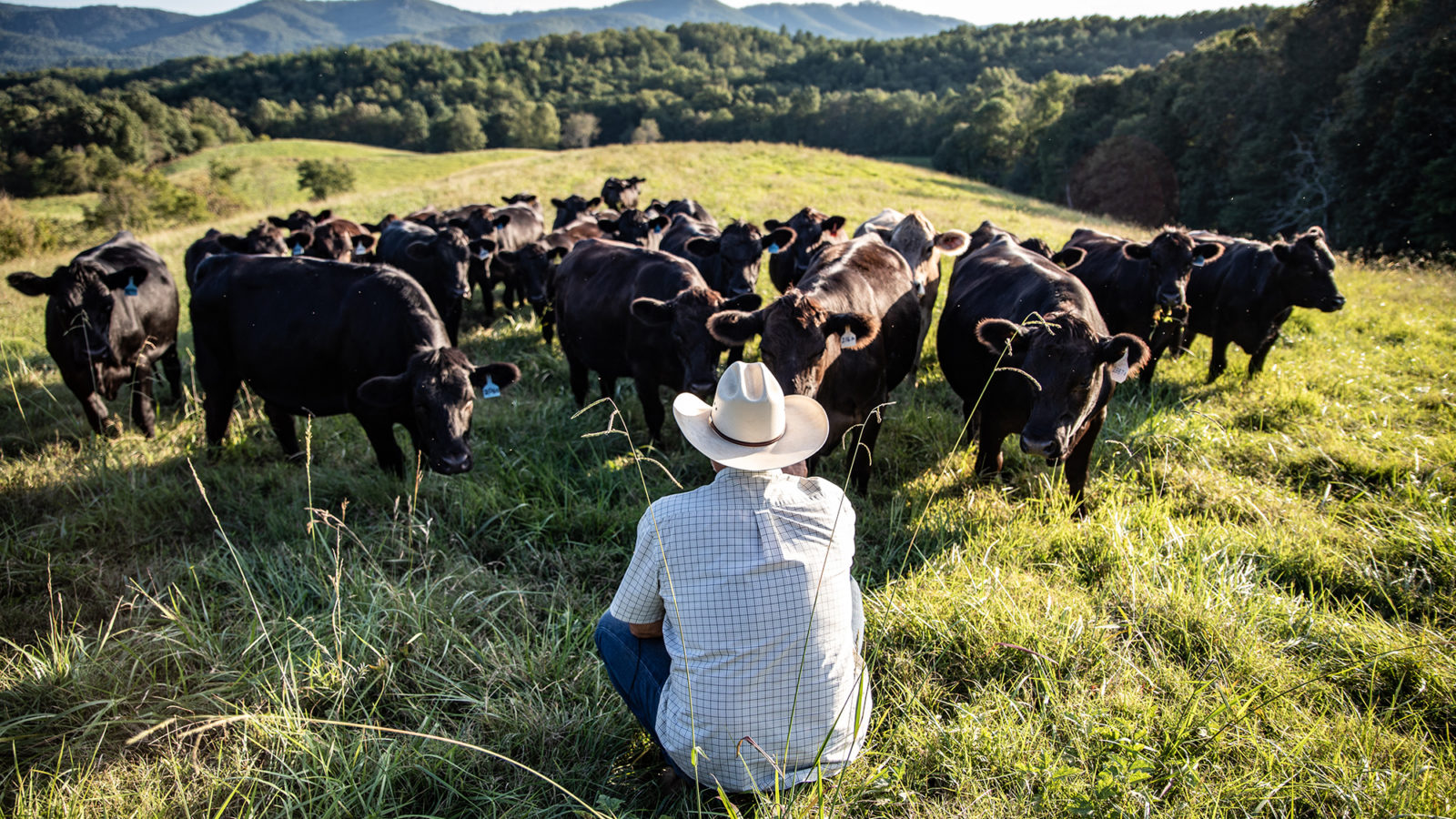Man sitting in pasture with cows